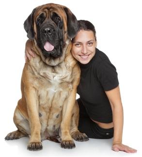 293 x 325 · 51 kB · jpeg, Big dog world is the uk s one stop shop ...